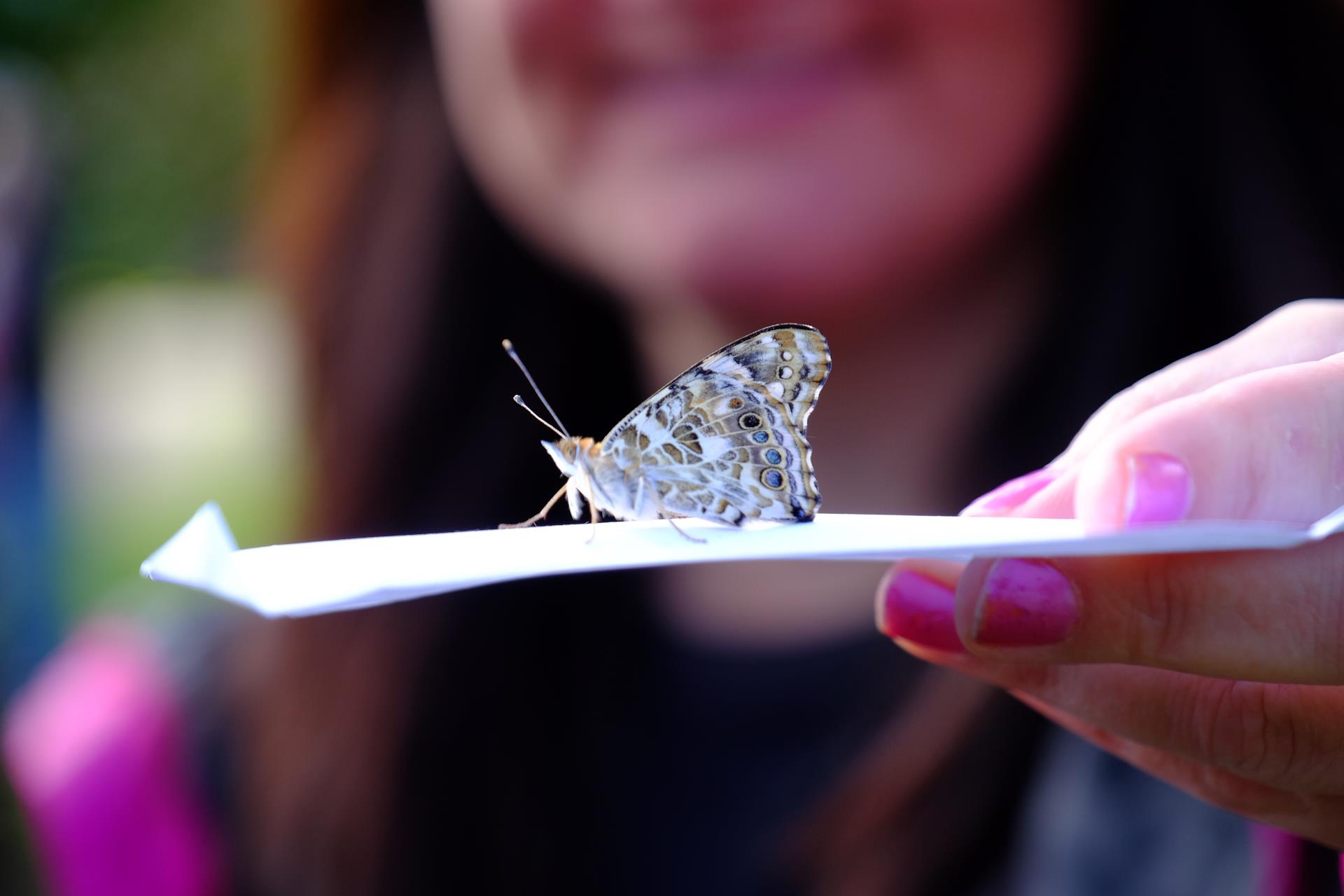 Photo of a butterfly on a hand